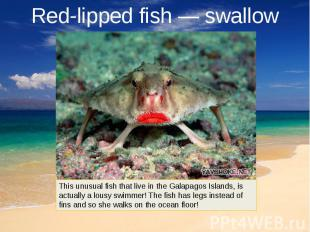 Red-lipped fish — swallow