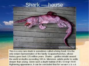Shark — house