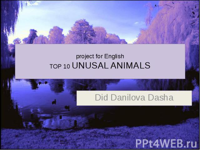 project for English TOP 10 UNUSAL ANIMALS Did Danilova Dasha