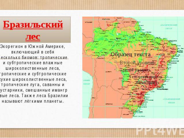 Бразильский лес ЭкорегионвЮжной Америке, включающий в себя несколькобиомов:тропические и субтропические влажные широколиственные леса, тропические и субтропические сухие широколиственные леса, тропические луга,саванны&n…