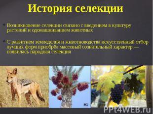 История селекции Возникновение селекции связано с введением в культуру растений