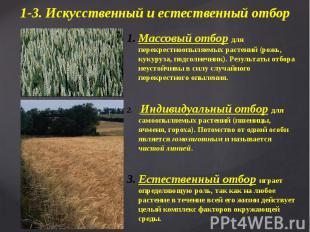 Массовый отбор для перекрестноопыляемых растений (рожь, кукуруза, подсолнечник).