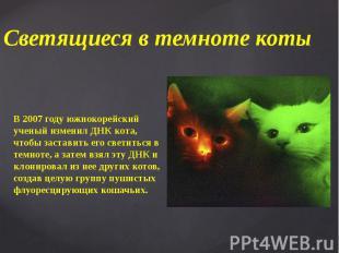 Светящиеся в темноте коты В 2007 году южнокорейский ученый изменил ДНК кота, что