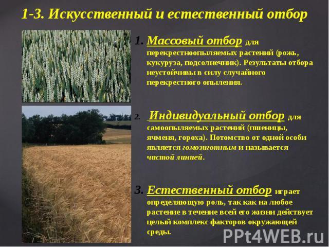 Массовый отбор для перекрестноопыляемых растений (рожь, кукуруза, подсолнечник). Результаты отбора неустойчивы в силу случайного перекрестного опыления. Индивидуальный отбор для самоопыляемых растений (пшеницы, ячменя, гороха). Потомство от одной ос…