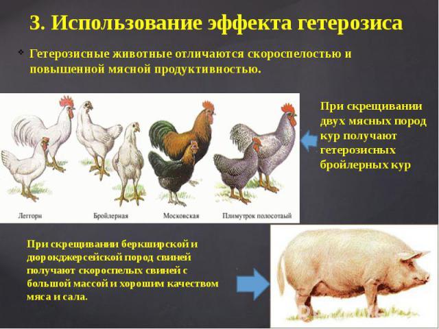 3. Использование эффекта гетерозиса Гетерозисные животные отличаются скороспелостью и повышенной мясной продуктивностью.