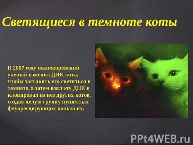 Светящиеся в темноте коты В 2007 году южнокорейский ученый изменил ДНК кота, чтобы заставить его светиться в темноте, а затем взял эту ДНК и клонировал из нее других котов, создав целую группу пушистых флуоресцирующих кошачьих.