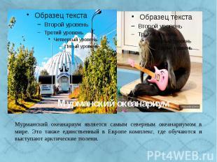 Мурманский океанариум - это единственный в Европе научный центр по изучению попу