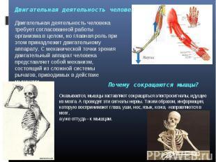 Двигательная деятельность человека Двигательная деятельность человека требует со