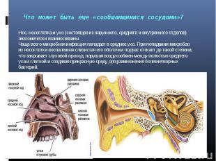 Нос, носоглотка и ухо (состоящее из наружного, среднего и внутреннего отделов) а