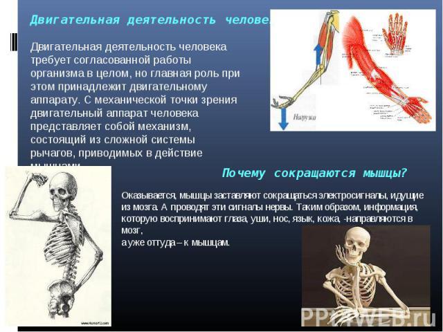 Двигательная деятельность человека Двигательная деятельность человека требует согласованной работы организма в целом, но главная роль при этом принадлежит двигательному аппарату. С механической точки зрения двигательный аппарат человека представляет…