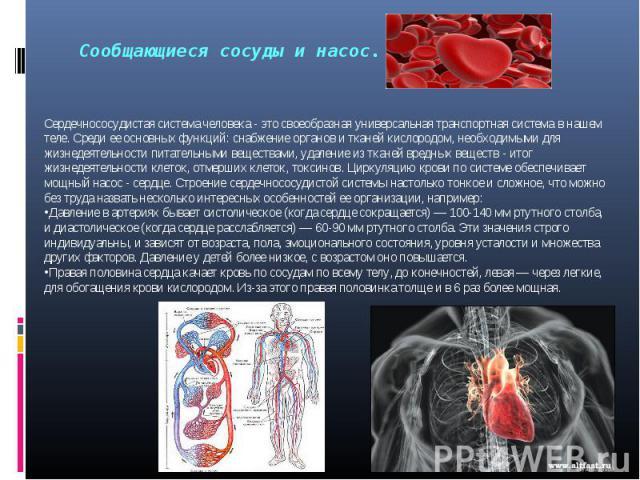 Сердечнососудистая система человека- это своеобразная универсальная транспортная системав нашем теле. Среди ее основных функций: снабжение органов и тканей кислородом, необходимыми для жизнедеятельности питательными веществами, удаление из тканей …