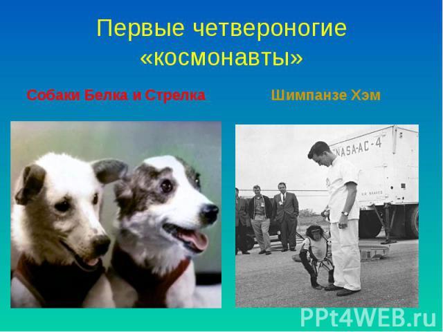 Собаки Белка и Стрелка Собаки Белка и Стрелка