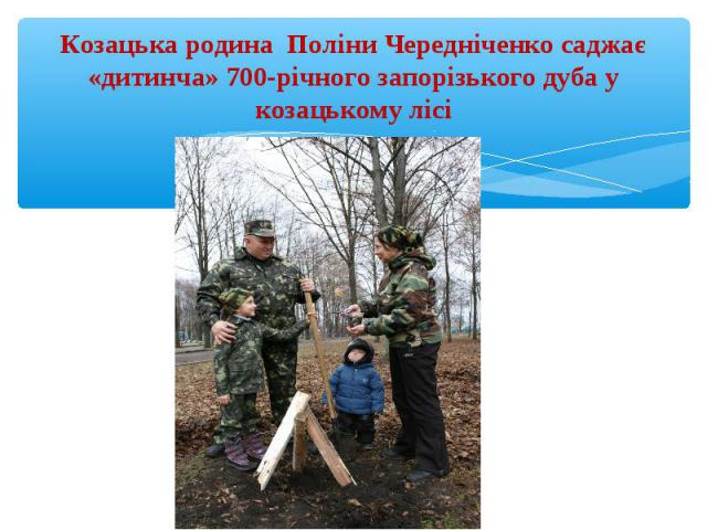 Козацька родина Поліни Чередніченко саджає «дитинча» 700-річного запорізького дуба у козацькому лісі