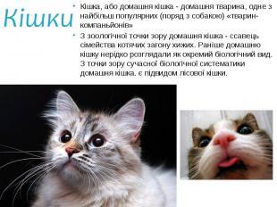 Кішка, або домашня кішка - домашня тварина, одне з найбільш популярних (поряд з