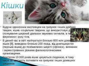 Будучи одиночним мисливцем на гризунів і інших дрібних тварин, кішка -соціальне