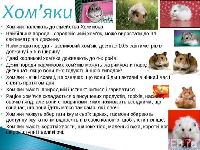 Хом'яки належать до сімейства Хомякова Хом'яки належать до сімейства Хомякова Найбільша порода - європейський хом'як, може виростати до 34 сантиметрів в довжину Найменша порода - карликовий хом'як, досягає 10.5 сантиметрів в довжину і 5.5 в ширину Д…