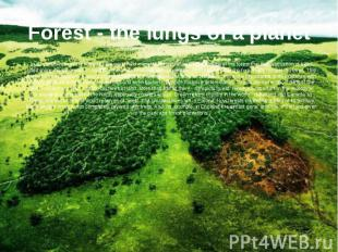 Forest - the lungs of a planet In all countries in every corner of the world hel