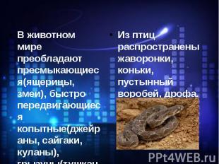 В животном мире преобладают пресмыкающиеся(ящерицы, змеи), быстро передвигающиес