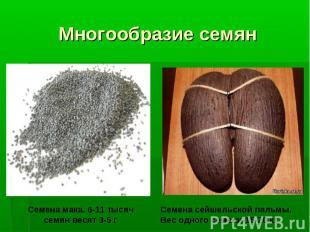 Многообразие семян Семена мака. 6-11 тысяч семян весят 3-5 г Семена сейшельской