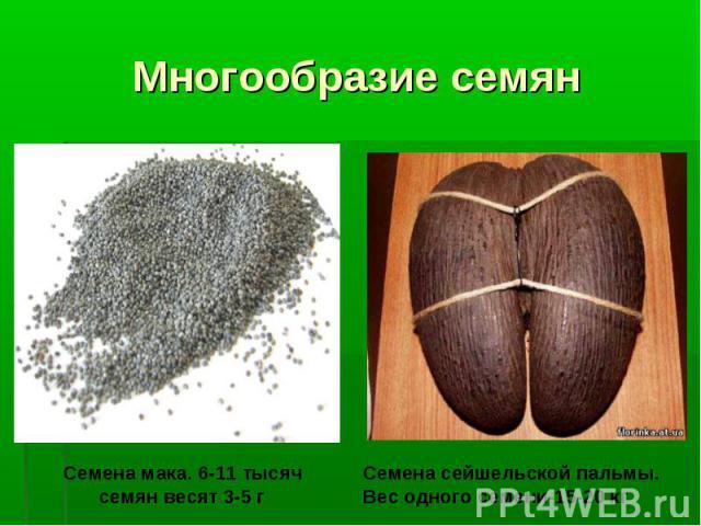 Многообразие семян Семена мака. 6-11 тысяч семян весят 3-5 г Семена сейшельской пальмы. Вес одного семени-15-20 кг