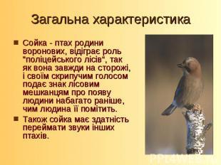 """Загальна характеристикаСойка - птах родини воронових, відіграє роль """"поліцейсько"""