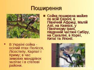 Сойка поширена майже по всій Європі, в Північній Африці, Малій Азії, на Кавказі,