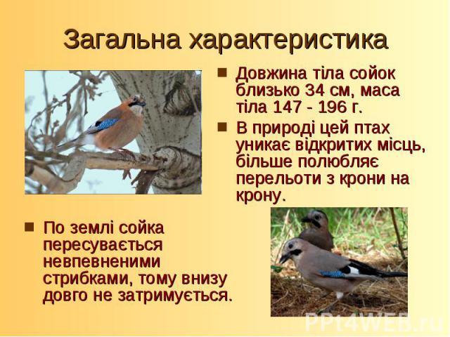 Довжина тіла сойок близько 34 см, маса тіла 147 - 196 г. В природі цей птах уникає відкритих місць, більше полюбляє перельоти з крони на крону. По землі сойка пересувається невпевненими стрибками, тому внизу довго не затримується