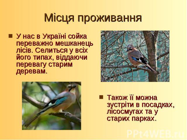 У нас в Україні сойка переважно мешканець лісів. Селиться у всіх його типах, віддаючи перевагу старим деревам. У нас в Україні сойка переважно мешканець лісів. Селиться у всіх його типах, віддаючи перевагу старим деревам.