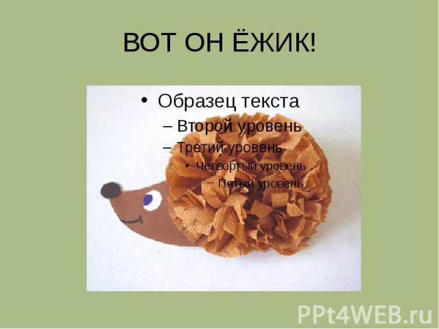 ВОТ ОН ЁЖИК!