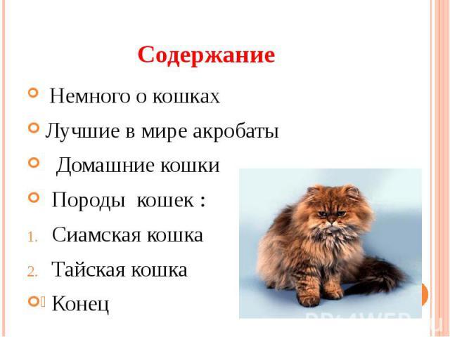 Содержание Немного о кошках Лучшие в мире акробаты Домашние кошки Породы кошек :Сиамская кошка Тайская кошка Конец
