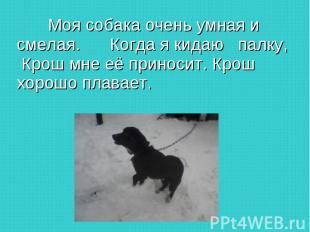Моя собака очень умная и смелая. Когда я кидаю палку, Крош мне её приносит. Крош
