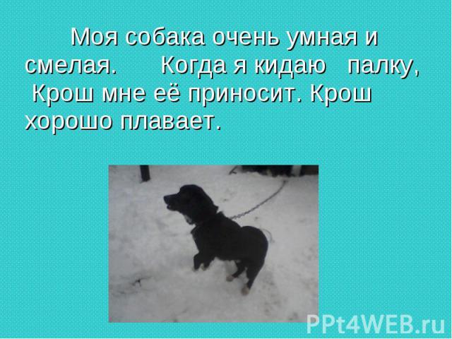 Моя собака очень умная и смелая. Когда я кидаю палку, Крош мне её приносит. Крош хорошо плавает.