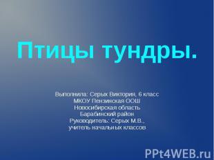 Птицы тундры. Выполнила: Серых Виктория, 6 класс МКОУ Пензинская ООШ Новосибирск