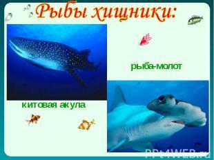 Рыбы хищники: