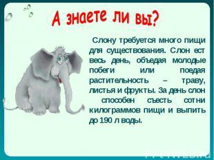 Слону требуется много пищи для существования. Слон ест весь день, объедая молоды