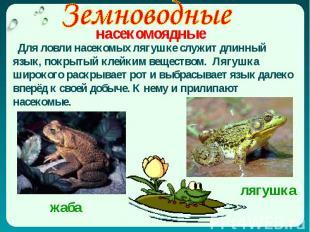 Для ловли насекомых лягушке служит длинный язык, покрытый клейким веществом. Ляг