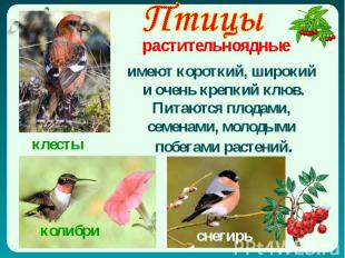 Птицы растительноядные имеют короткий, широкий и очень крепкий клюв. Питаются пл