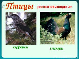 Птицы растительноядные: