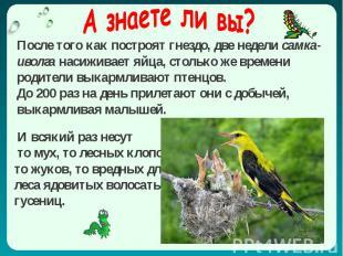 А знаете ли вы? И всякий раз несут то мух, то лесных клопов, то жуков, то вредны