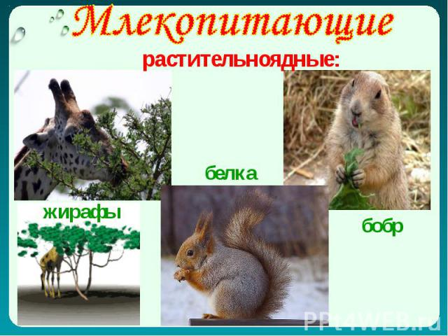 Млекопитающие растительноядные: