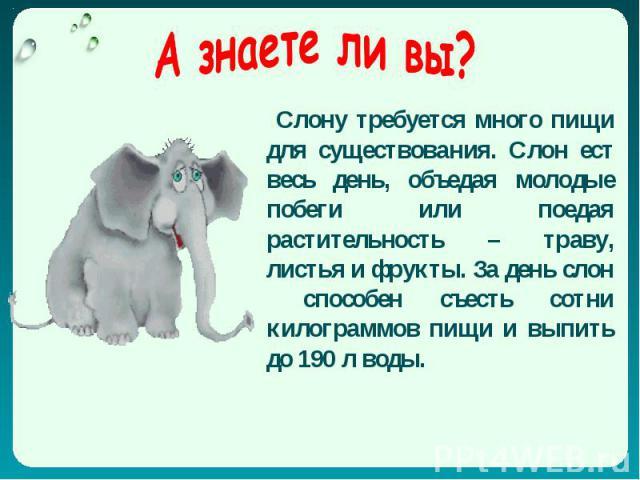 Слону требуется много пищи для существования. Слон ест весь день, объедая молодые побеги или поедая растительность – траву, листья и фрукты. За день слон способен съесть сотни килограммов пищи и выпить до 190 л воды.