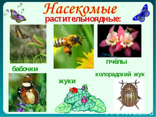 Насекомые растительноядные: