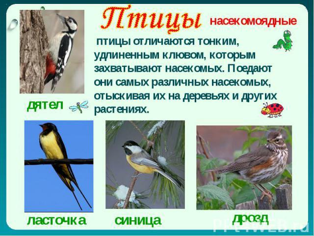 Птицы птицы отличаются тонким, удлиненным клювом, которым захватывают насекомых. Поедают они самых различных насекомых, отыскивая их на деревьях и других растениях.