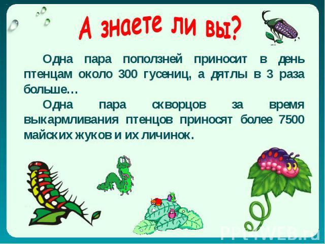 А знаете ли вы? Одна пара поползней приносит в день птенцам около 300 гусениц, а дятлы в 3 раза больше… Одна пара скворцов за время выкармливания птенцов приносят более 7500 майских жуков и их личинок.