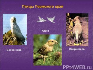 Птицы Пермского края