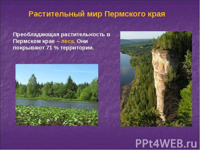 Растительный мир Пермского края Преобладающая растительность в Пермском крае – леса. Они покрывают 71 % территории.
