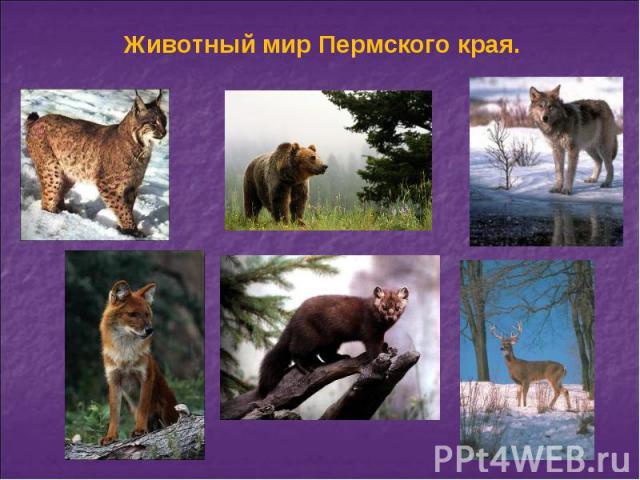 Животный мир Пермского края.