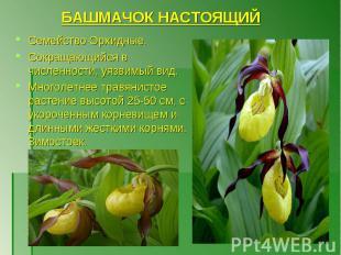 Семейство Орхидные. Сокращающийся в численности, уязвимый вид. Многолетнее травя