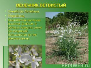 Семейство Лилейные. Редкий вид. Многолетнее растение высотой 30-90 см. В области