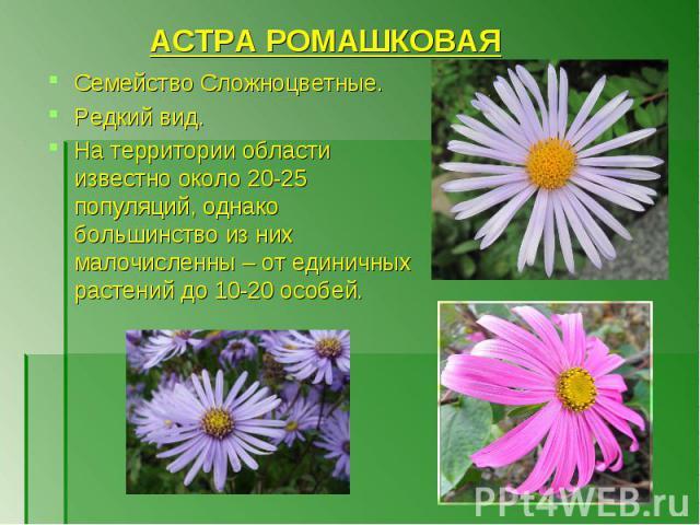АСТРА РОМАШКОВАЯ Семейство Сложноцветные. Редкий вид. На территории области известно около 20-25 популяций, однако большинство из них малочисленны – от единичных растений до 10-20 особей.